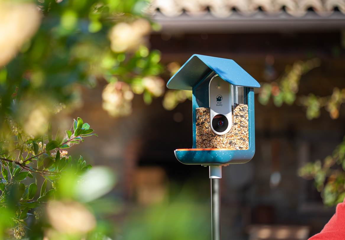 Bird Buddy will send an alert to your phone whenever a bird drops by
