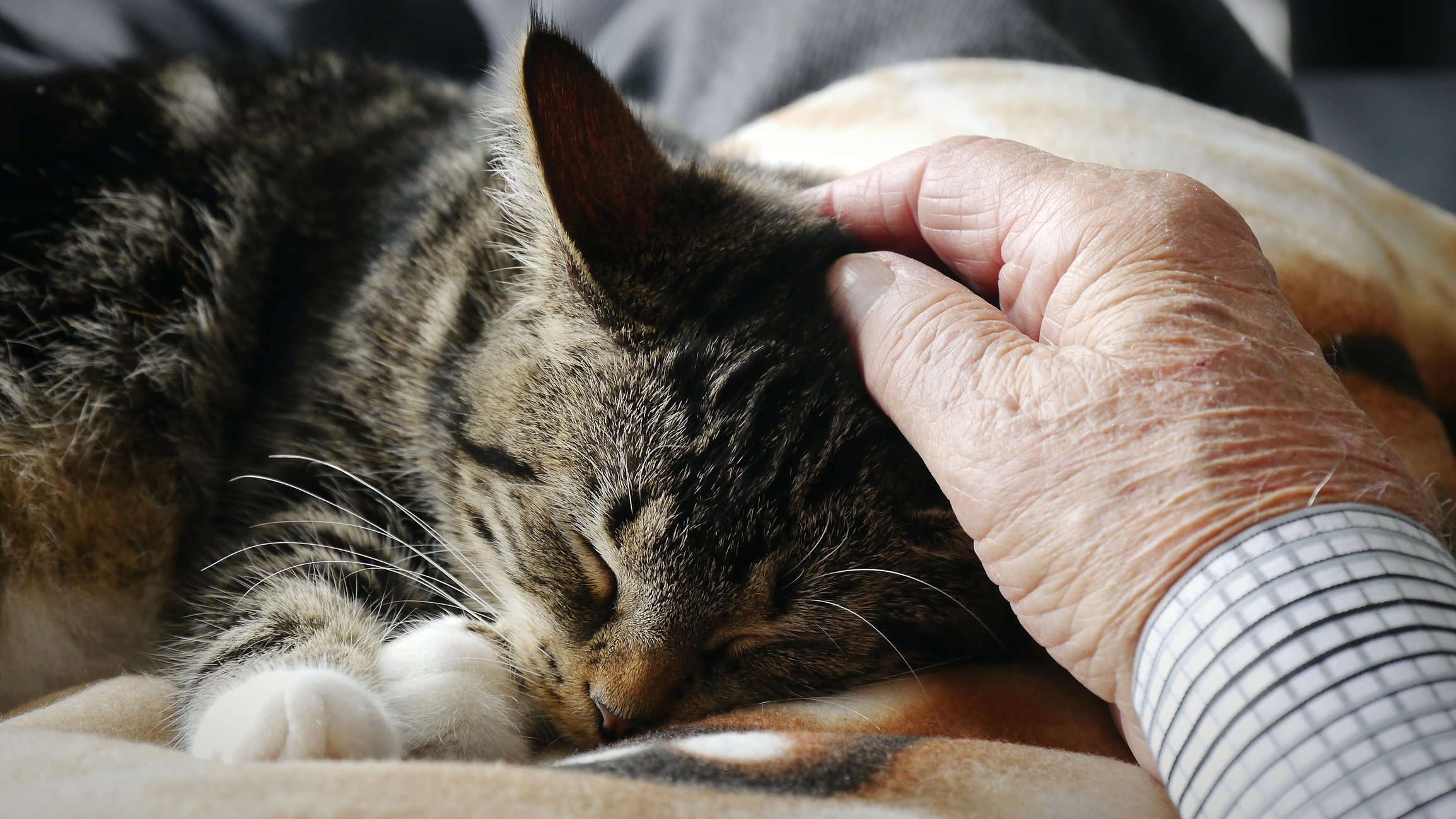 Today, our pet vet helps an old cat with an overactive thyroid