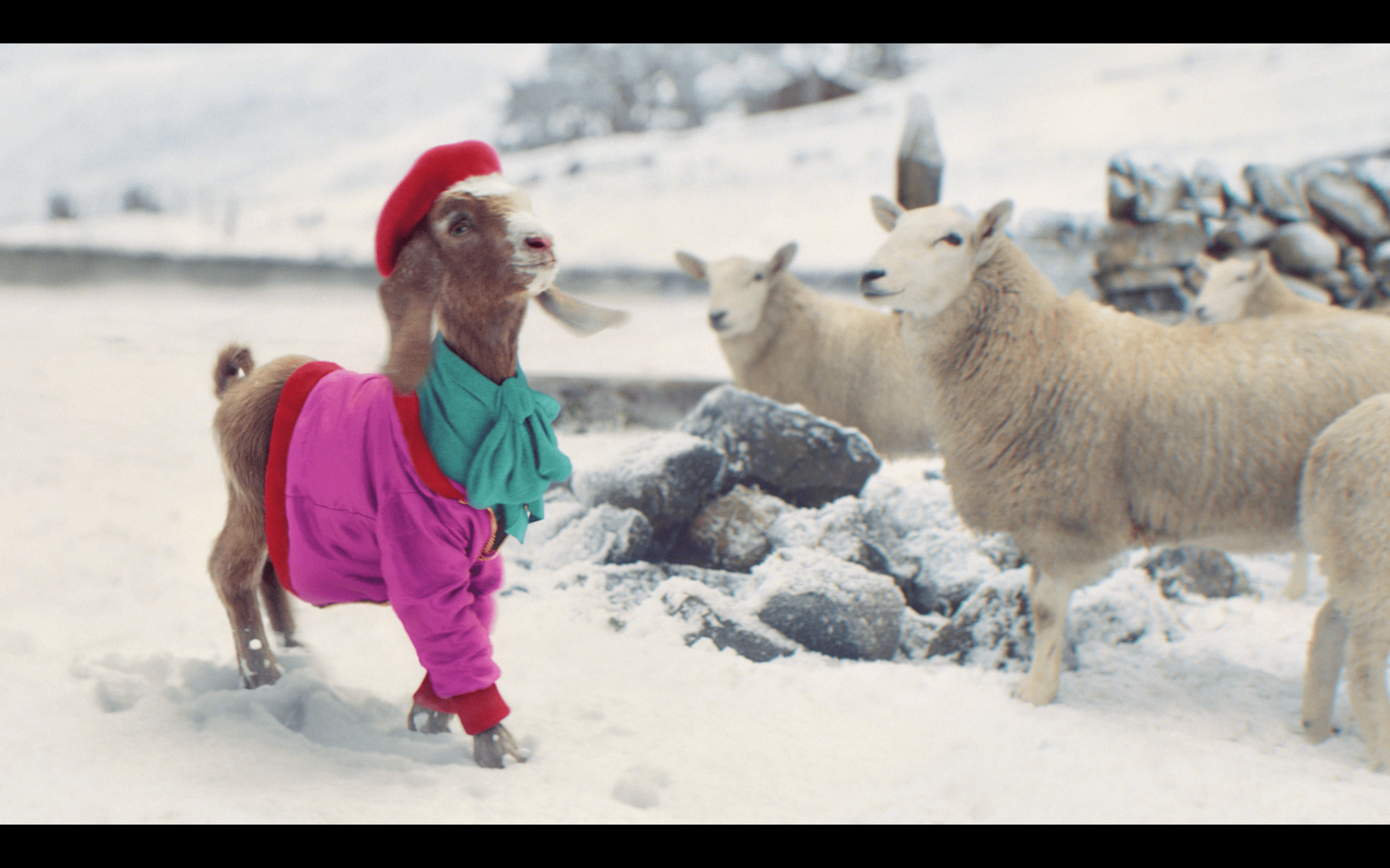 The advert features Lil' Goat strutting her stuff