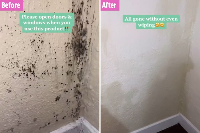 Cleaning fan gets rid of grim mould on walls in seconds with £18