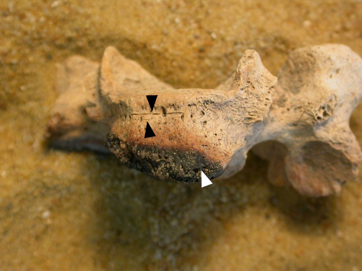 The discovery of 137 bones revealed many dead bodies had been destroyed after their death