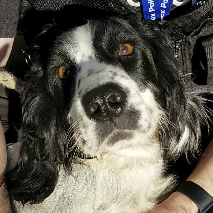 One of the dogs has been reunited with its owner however the other nine still remain in the care of the police