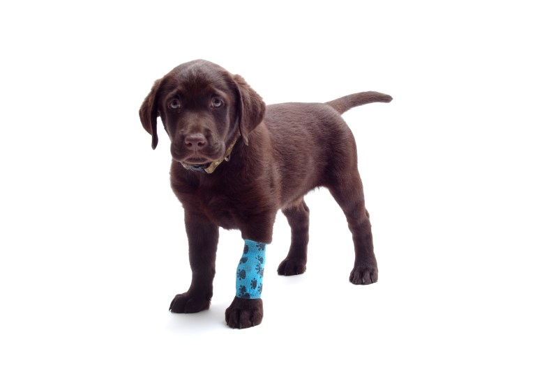 You may be a career psycopath if you're not bothered by seeing injured animals