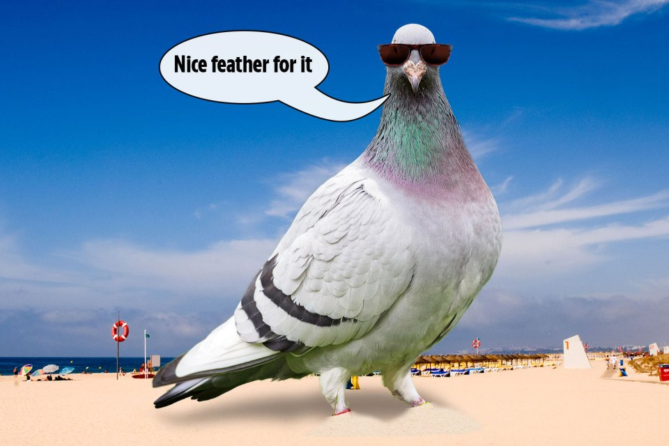 British expats were left stunned when they saw some of the 'tired and disorientated' missing homing pigeons in Majorca