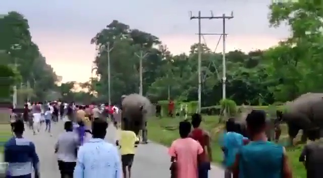 The elephant returned to the herd on the opposite side of the road after trampling the man