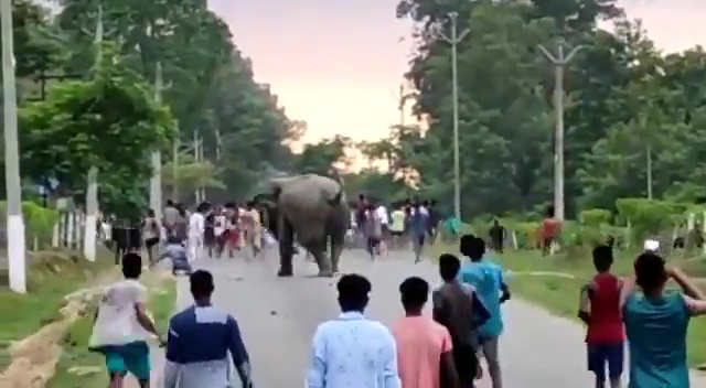 The huge Indian elephant made a beeline for a man who had stumbled by the roadside