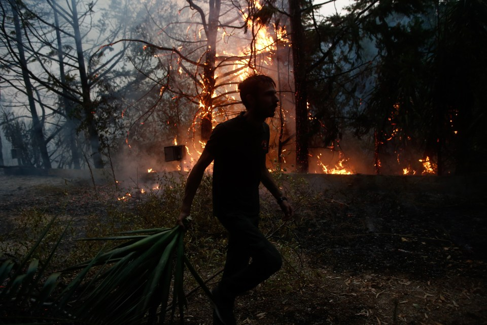A total of 81 forest fires have been reported