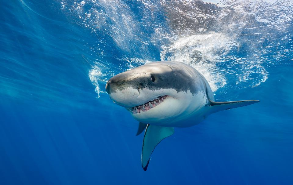 A new technique can save people's lives from shark attacks