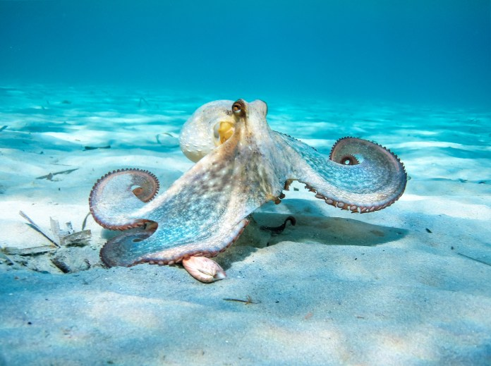 Nicholas paid £110,000.  I bought an octopus