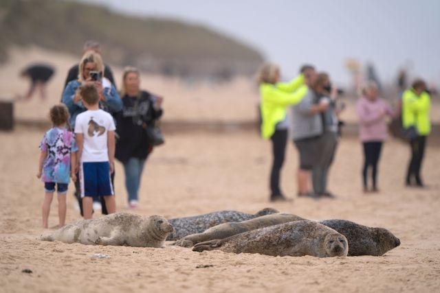 Some people gingerly stood their children next to the seals