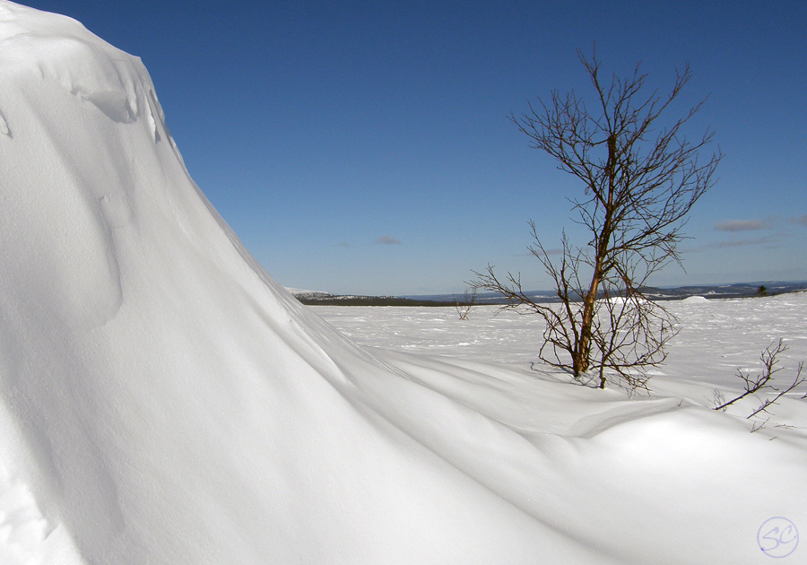 Lone tree and snowdrift