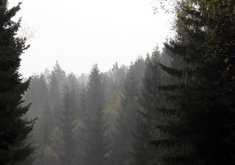 Misty firs
