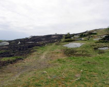 Burned landscape 1