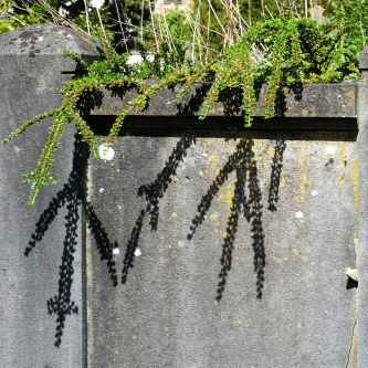 Shadows on a headstone