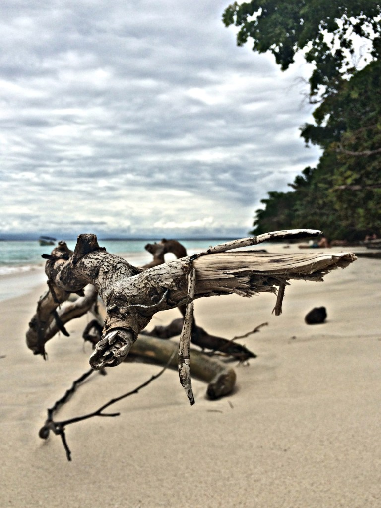 Drift wood on the beach in Bocas del Toro, Panama