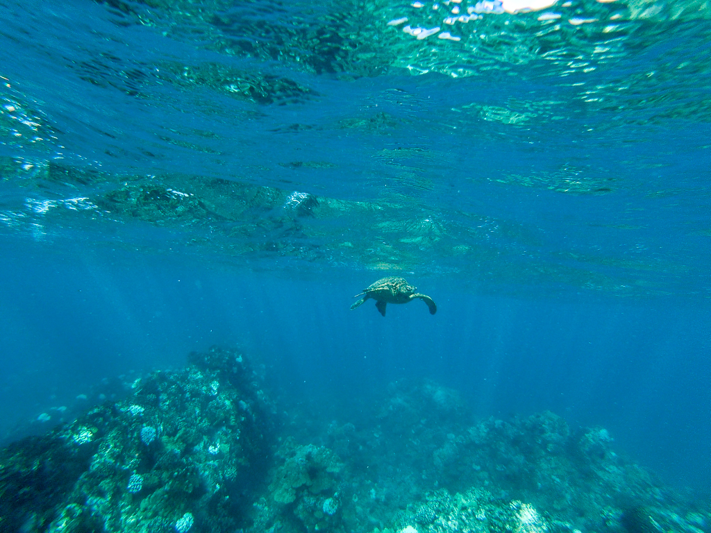 Travel Photos with a GoPro, Snorkeling with sea turtles in Maui