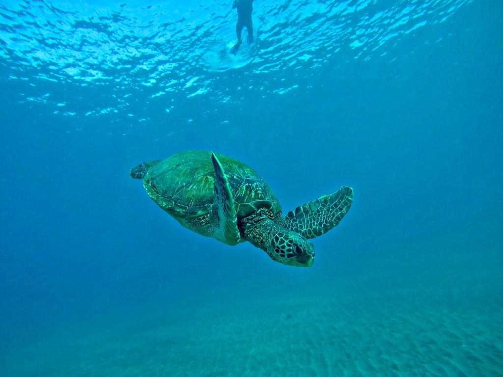 Kayaking in Maui Makena Turtle Town