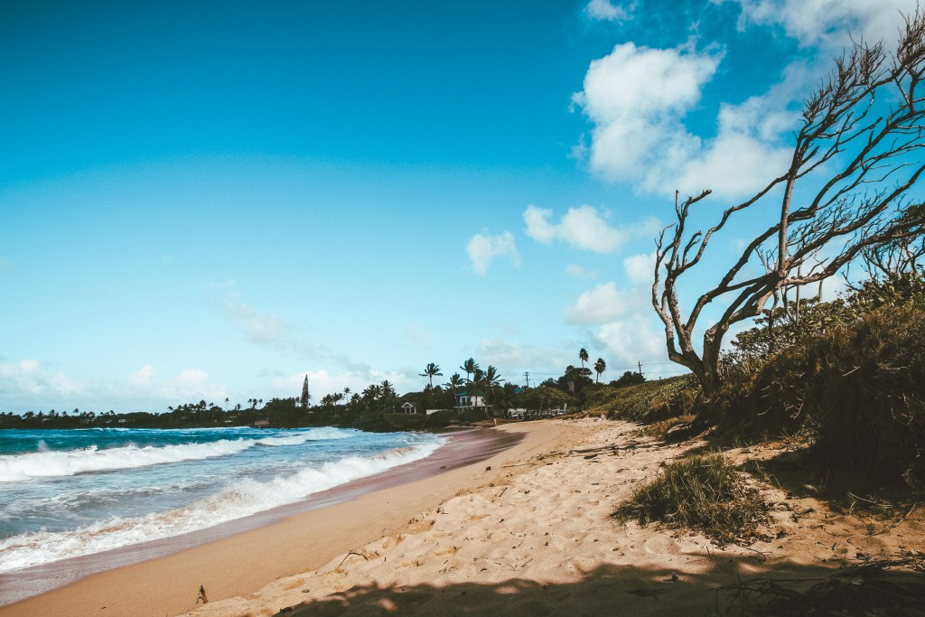 Westfalia Camping in Maui: Everything You Need to Know