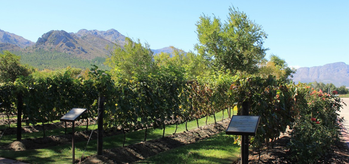 favourite-vineyards-wine-tasting-western-cape-travel-guide-top-things-to-do-in-cape-town-south-africa-la-motte-stellenbosch