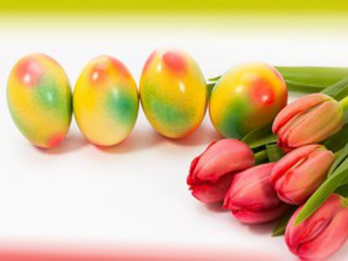 eggs and tulips