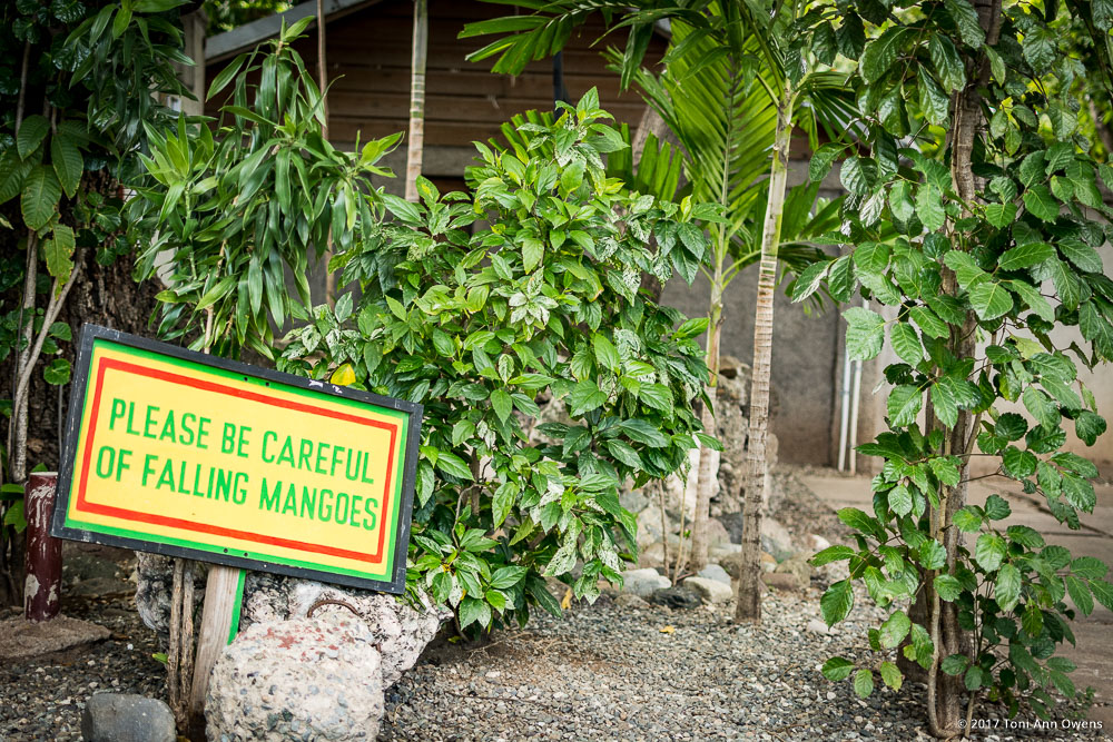 Falling Fruit Sign at the Bob Marley Museum