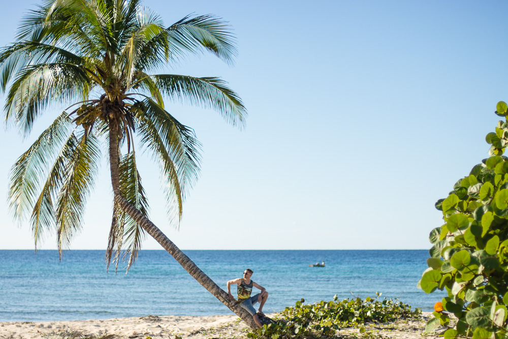 Jerry Relaxing on a Palm Tree at Playa Girón in Cuba