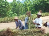 Oiling the Seeds of Progress - The Bayin Foods Story