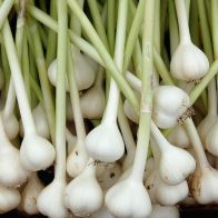 Drummond House Garlic