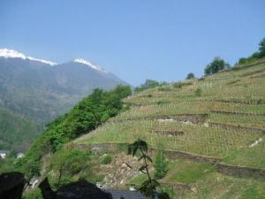 The Hills are Alive With the Taste of Wines from The Alps