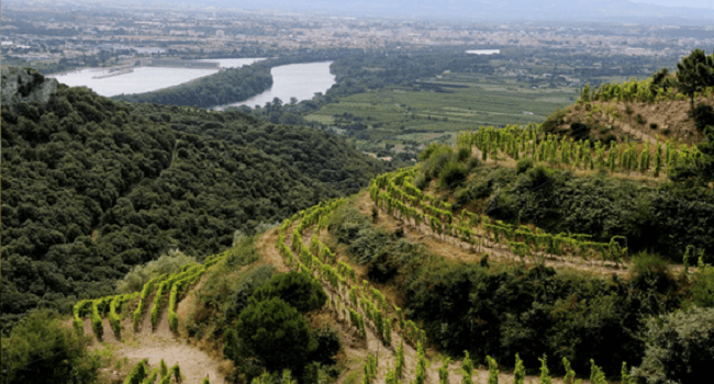 Wines of the Rhône Valley