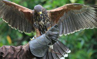 the-lodge-falconry