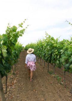 Vineyard Cantine Paolo Leo Brindisi