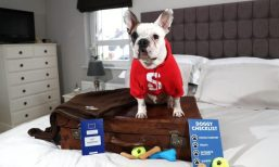 STENA LINE IS TOP DOG FOR HOLIDAY MAKERS: