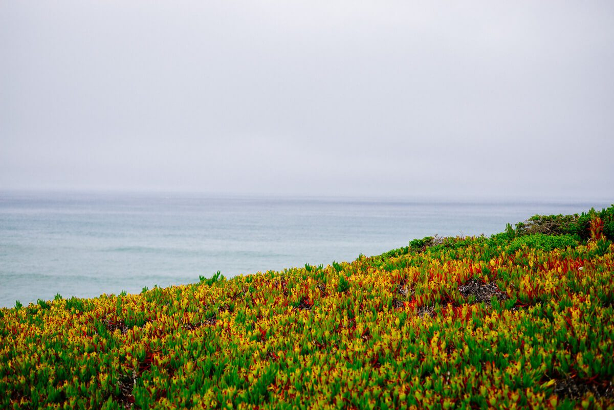 Overlooking the ocean on a walk to the beach at The Ritz-Carlton Half Moon Bay