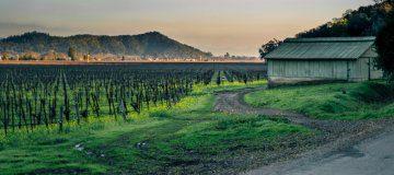 Napa Valley Guide