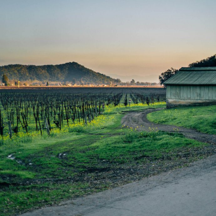 Yountville in Napa Valley by The Taste SF vineyards and a barn with mustard growing