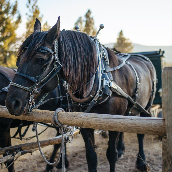 Horses at the Chuck Wagon Dinner, The Resort at Paws Up Montana, The Taste SF San Francisco