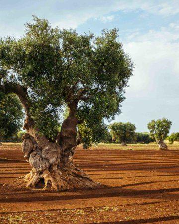 Rediscovering Puglia