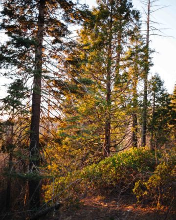 Getaway to California's Gold Country