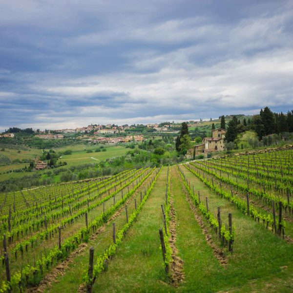 Go with us to Tuscany to taste and meet small production unique winemakers etc