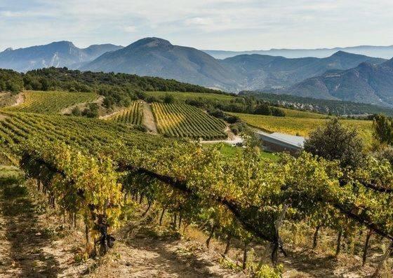 penedes catalunya wine region