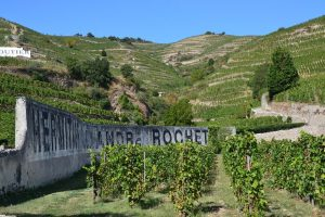 Rhone Valley wine tasting masterclass