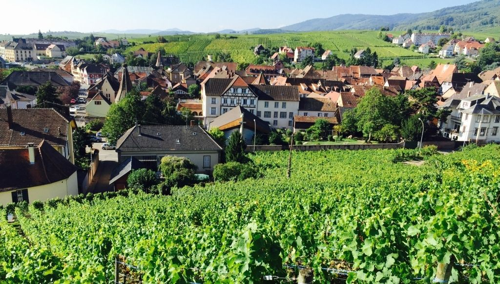 alsace wine and food pairing dinner by the tasting class