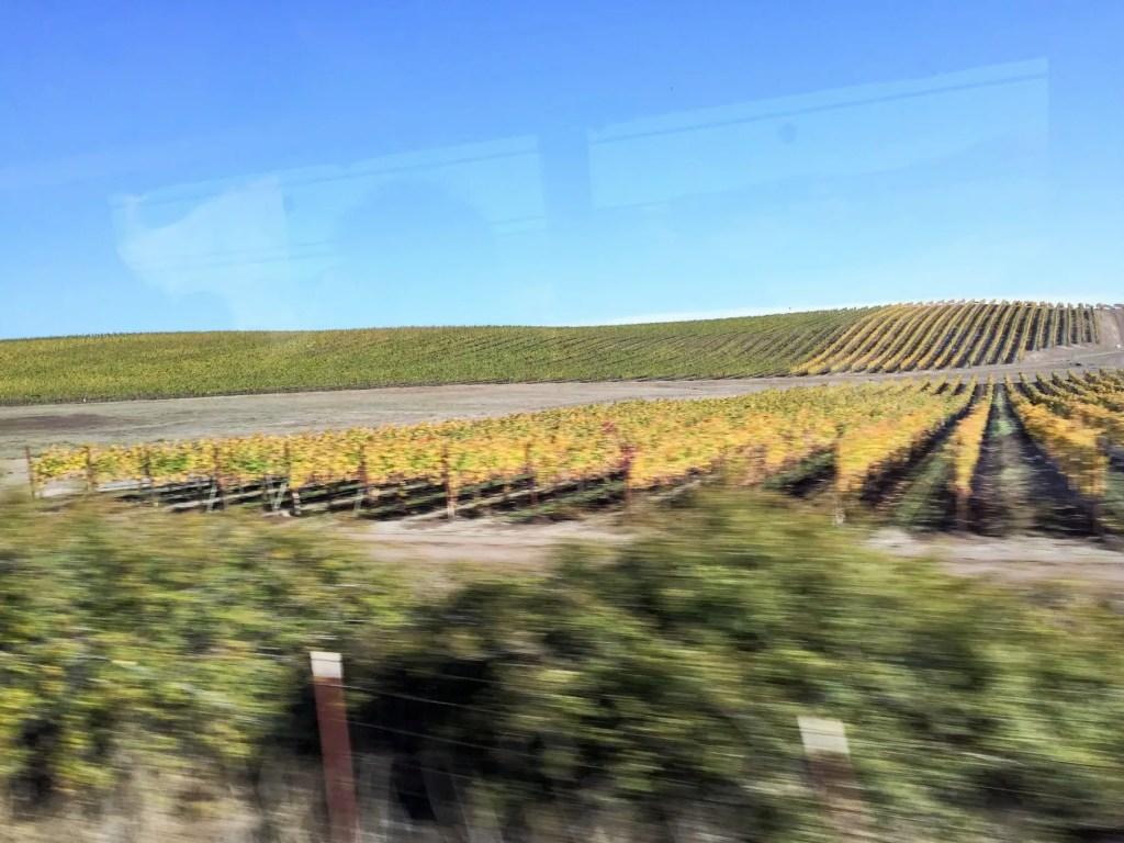 wine-tour-6