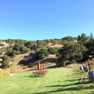 Wine Tasting in Napa and Sonoma