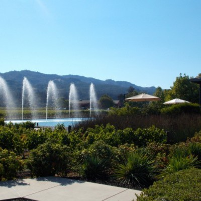 Napa Valley Honeymoon