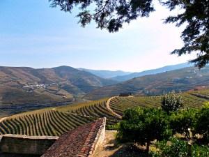 Porto wine country