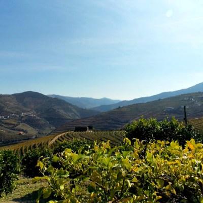 Three Days in Porto: Exploring the Douro River Valley
