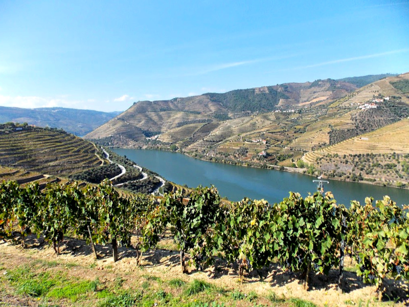 Portugal Douro Valley vineyards