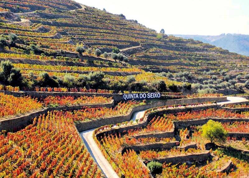 Quinta do Seixo Vineyards